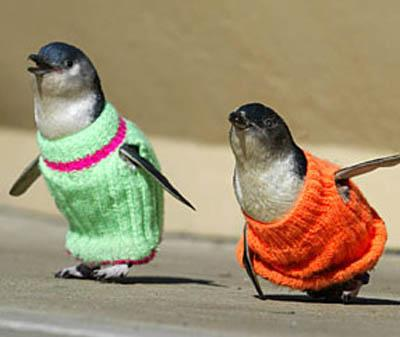 penguins-sweaters